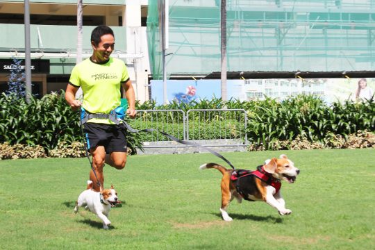 PF Founder and CEO Jeff Lo runs both Kem and Duke in Easy Dog