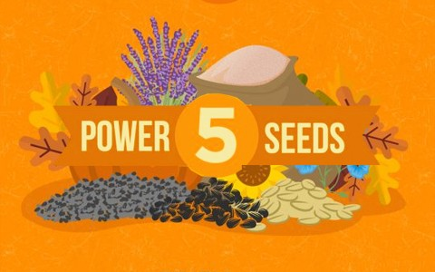power-seeds-cover